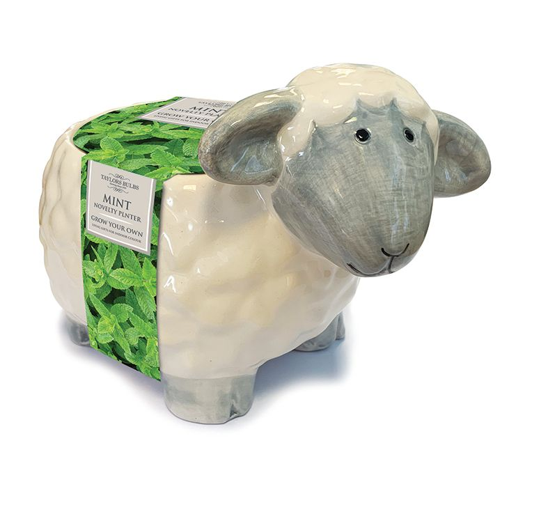 NOVELTY SHEEP PLANTER with mint