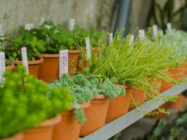Blackbrooks Garden Centres Garden Centres In Tune With The Local
