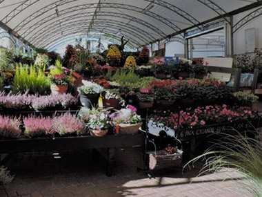 Blackbrooks Garden Centres Garden Centres In Tune With The Local Community